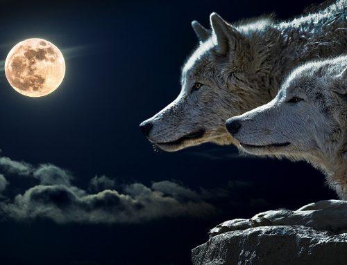 ¿Qué nos aporta la Luna de las Bendiciones?  Sintiendo la Luna Llena de Julio.